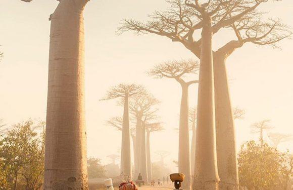 Grands tsingy, baobabs et lagons