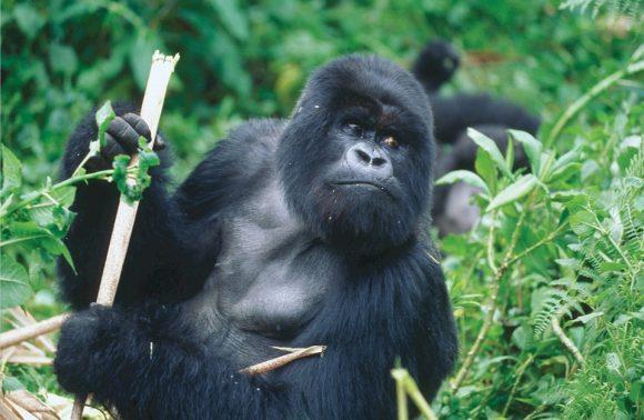 Nuances et nature sauvage du Rwanda