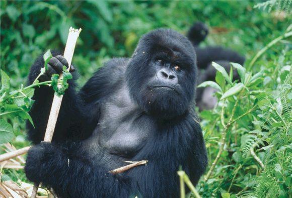 RWANDA – Nuances et nature sauvage du Rwanda