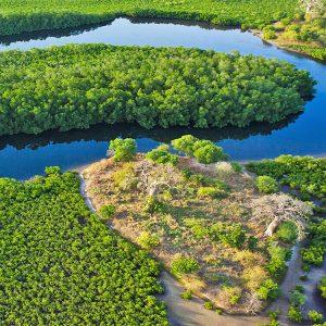 SÉNÉGAL – Mangroves et bolongs