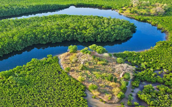 SÉNÉGAL – Mangroves et bolongs du Sine Saloum