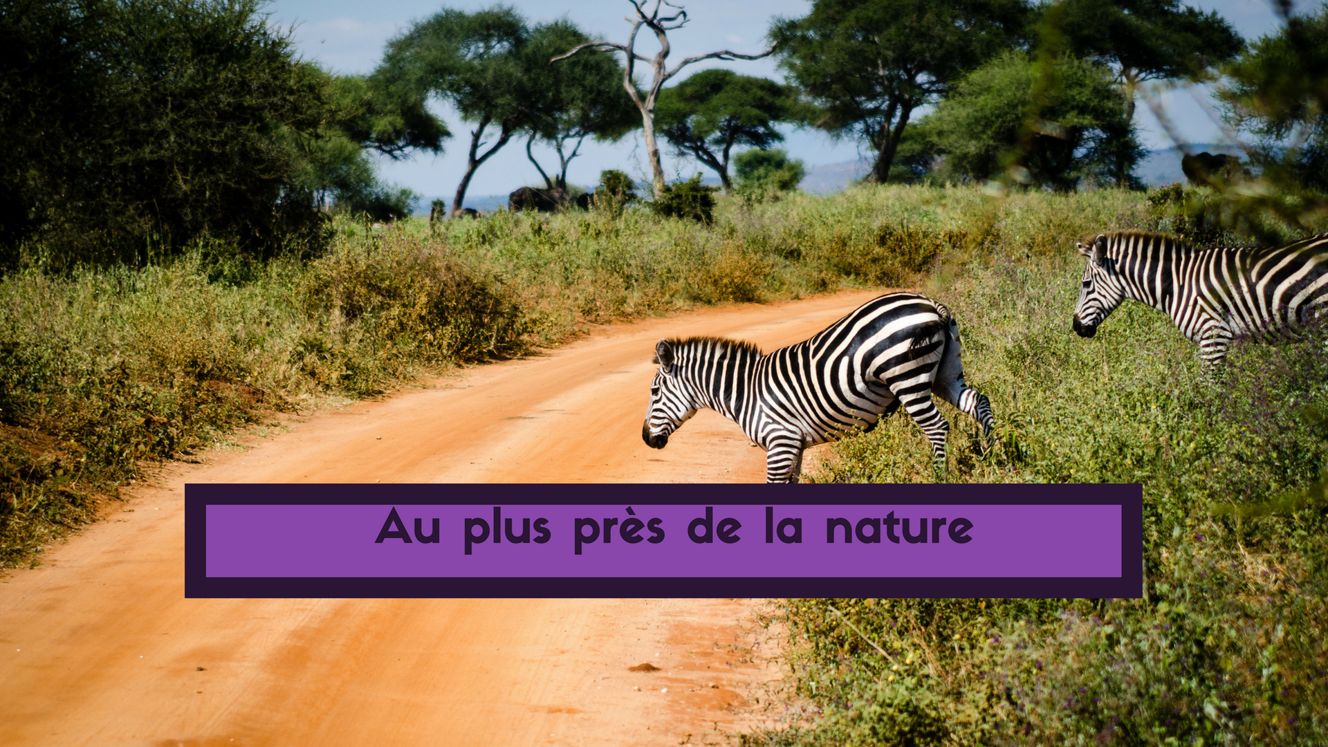 Safari responsable en Afrique