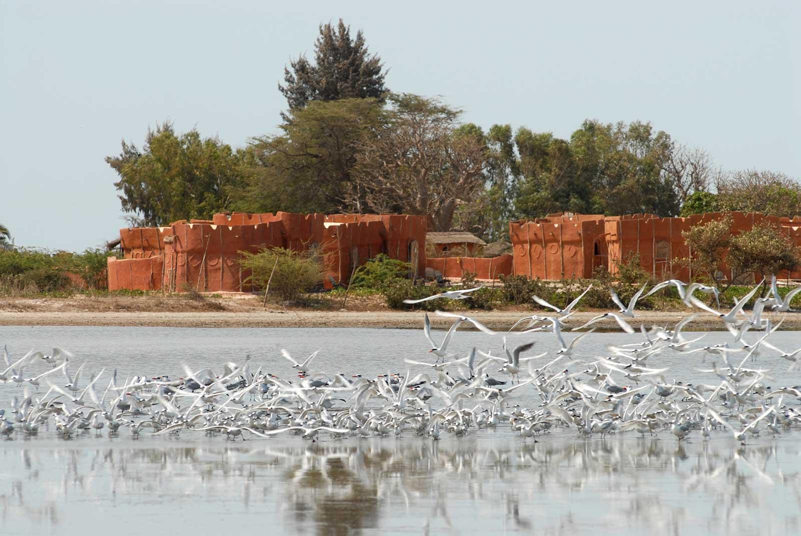 Ecolodge de Palmarin dans le Sine Saloum