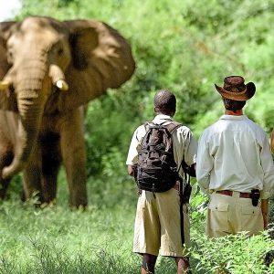 Le safari en Zambie autrement